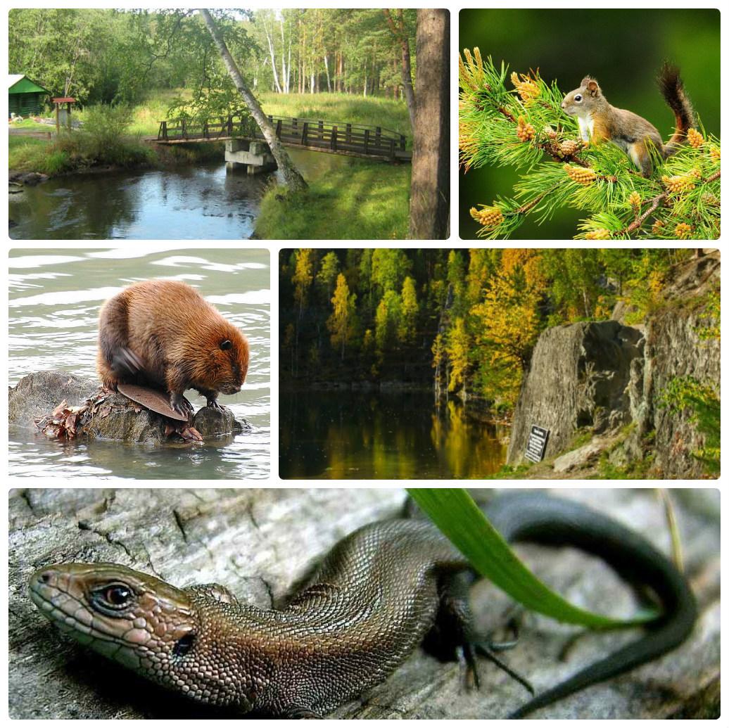 Экскурсия — поход из Екатеринбурга природный парк «Бажовские места»